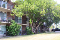 Available Now - 1 Bedroom Apartment in Quiet Adult Building