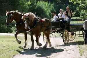 Wedding Carriage Gatineau Ottawa / Gatineau Area image 5
