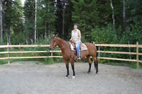 Registered QH Mare - strong, athletic