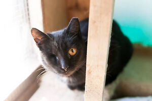 Cats and Kittens for Adoption! Sarnia Sarnia Area image 5