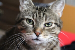 Lost Cat: Blueberry the brown tabby