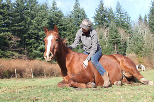 2003 sorrel QH kids/trail horse Campbell River Comox Valley Area image 1