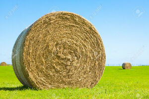 Round hay bales- good quality