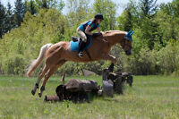 Looking for a nice horse to part board?