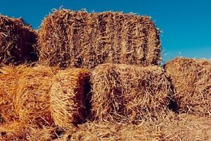 Hay and/or Straw Needed!