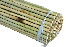 Bamboo Fencing Rolls, 6'H or 8'H