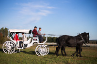 Horse-drawn Carriage and Wagon Rides