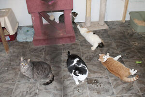 """MINDEN """" CAT SANCTUARY """"  Forever Homes Needed!"""