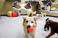 Our small dog section at Back in the Pack dog daycare NW