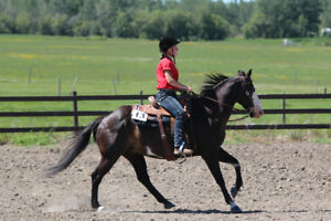 16 year-old quater horse