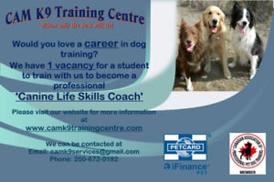Train to become a Professional Canine Life Skills Coach
