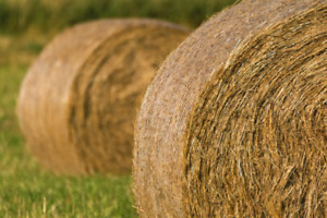 Wanted / Large Round Hay Bales