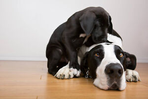 Dog Sitting/Dog Sitter/Boarding in our home Edmonton Edmonton Area image 3