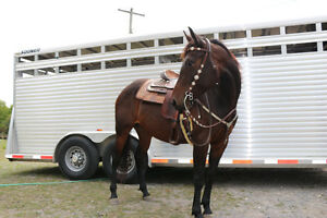 2012 Registered Quarter Horse Mare