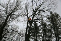 TREE CARE REMOVAL TRIMMING PRUNING DEADWOOD CHIPPING PLANTING