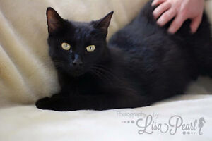 Many Cats & Kittens available for adoption