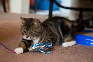 Meet TIFFANY...20 Wk.Old Kitten..Spayed/Shots