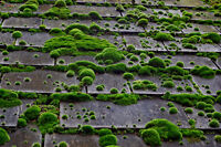 Cheapest Moss removal and gutter cleaning with best results