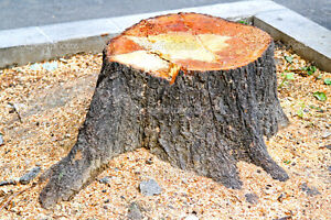 SUMMER TREE REMOVAL, TREE CUTTING, BRANCH REMOVAL, STUMP REMOVAL