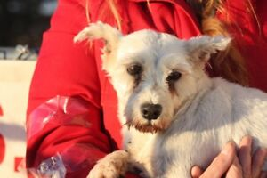 ADOPTABLE Schnauzer & co. Visit the shelter Wed-Frid 1-4pm