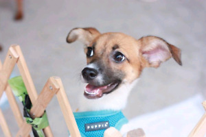 Niagara Dog Rescue - Khan Cho is Lookong for a Laid Back Home