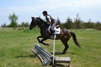 Registered 9 yr. old TB Mare for sale