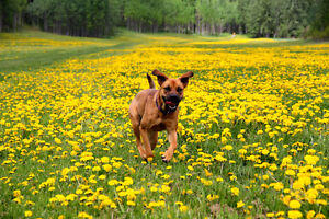 Dog Walks, in-home care, Pet sitting