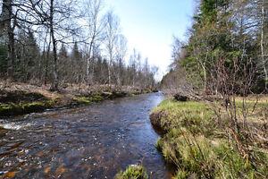 Ste-Praxède, près du Grand Lac St-François, belle terre à bois !