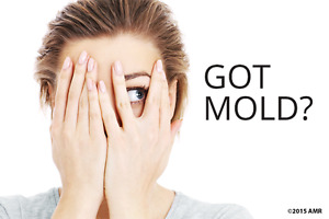 Mold Inspections & Mould Remediation / Removal in Oakville area.