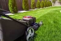 Lawn Mowing $20 / Fall Cleanup / Hedging + More!