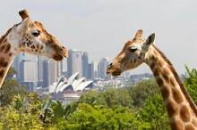 Taronga Zoo Ticket Pass Sydney City Inner Sydney Preview
