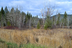 Great Building Lot on South Lakeside Williams Lake Cariboo Area image 2