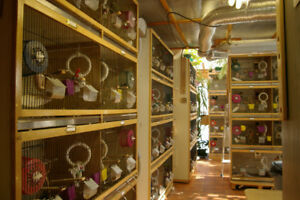 Small mammal breeding cages