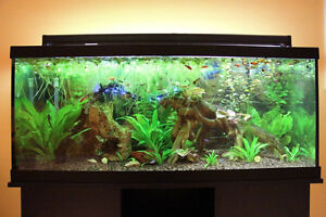 Fish and plants for sale