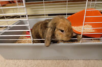 Cute bunny for sale!!!(with cage, bottle and food)