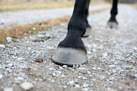 Hoof care available in eastern Ontario