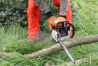 Tree removal, pruning, stump grinding and clean ups