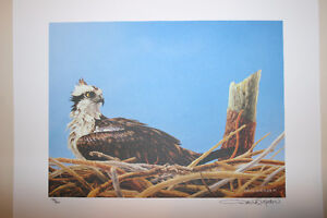 Limited edition set of 6 David Kitler bird prints (#193 of 200)