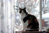 LOST Calico Cat - Molly