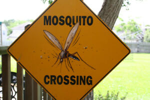 All Season Mosquito Protection- Book now 25% off