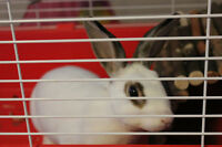 Small Pet Boarding (Bunnies, guinea pigs, hamsters, reptiles...)