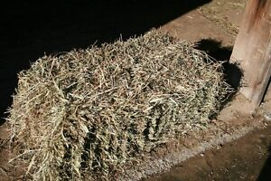 First and second cut hay