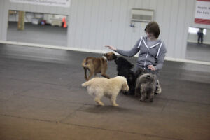 Puppy Socialization Classes\
