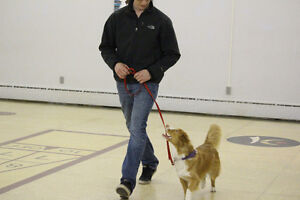 Intermediate Obedience Class starting Thursday March 23rd