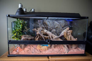 Bearded dragon terrarium loaded with accessories