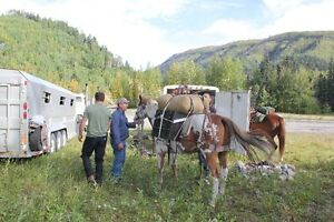 Mountain Horses for Guide/Outfitter Prince George British Columbia image 4