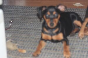 MINPIN LOOKING FOR HOME