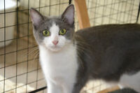 Spayed Sisters (would love a home together)