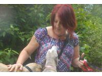 Dog walking / Dog boarder / Home visits.