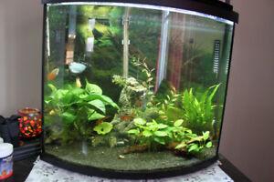 Aquarium 26 gallons vitre bombée